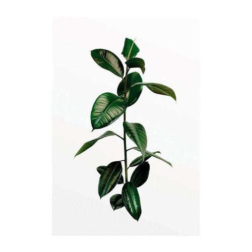 Komar Poster »Ficus Branch«, Pflanzen, Höhe: 40cm