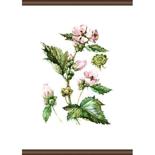 queence Leinwandbild »Pflanzen Anatomie«, 50x70 cm
