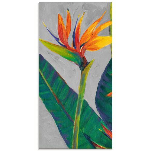Artland Glasbild »Paradiesvogel I«, Pflanzen (1 Stück)