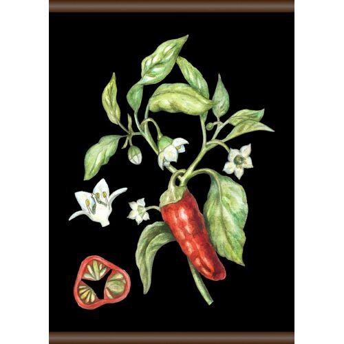 queence Leinwand »Chili«, Leinwand Rollbild 50x70 cm, bunt