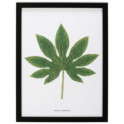 G&C Bild »Blatt Fatsia Japonica«, 30/40 cm, gerahmt