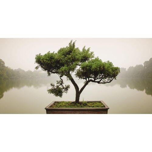 Home affaire Glasbild »Panom: Chinesischer Bonsaibaum«, 100/50 cm