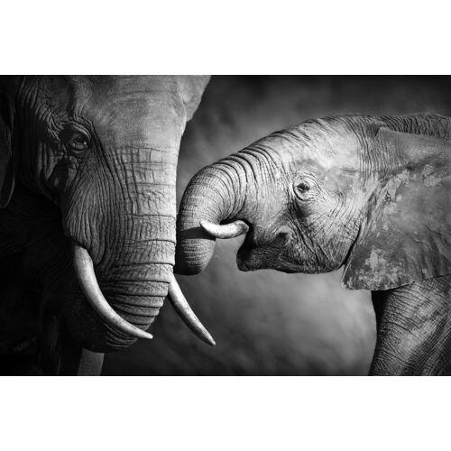 queence Leinwandbild »Elefant«