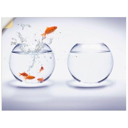 Artland Wandbild »Goldfischaquarium«, Wassertiere (1 Stück)