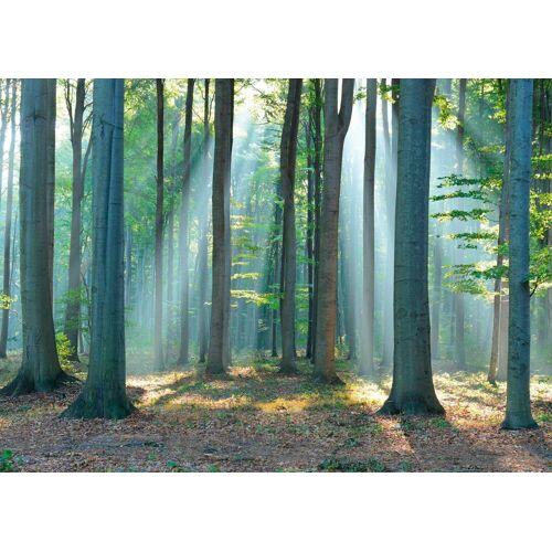 Deco-Panel »Wald im Sonnenlicht«, 140/100 cm