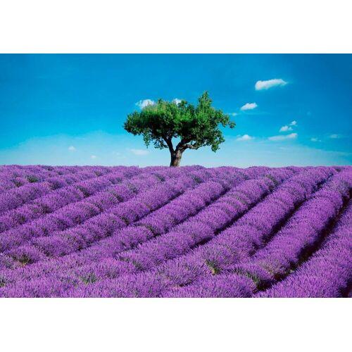 Fototapete »Provence - Lavendelfeld«