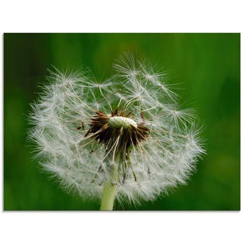 Artland Glasbild »Pusteblume I«, Blumen (1 Stück)