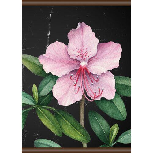 queence Leinwand »Rosa Blüte«, Leinwand Rollbild 50x70 cm, bunt