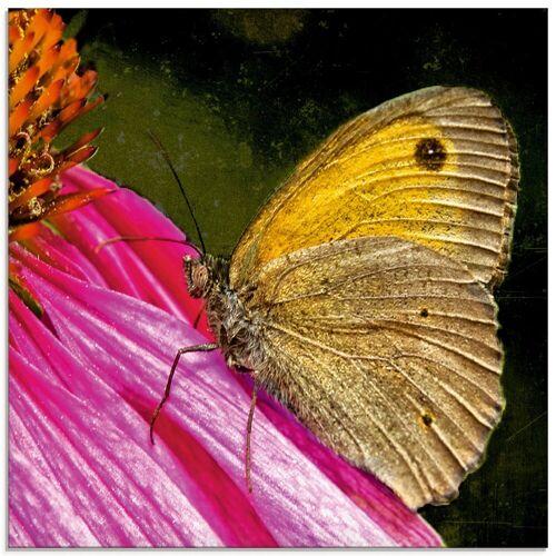 Artland Glasbild »Großes Ochsenauge«, Insekten (1 Stück)
