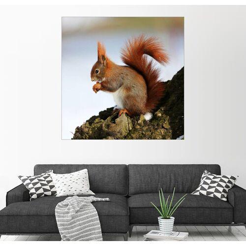 Posterlounge Wandbild, Eichhörnchen