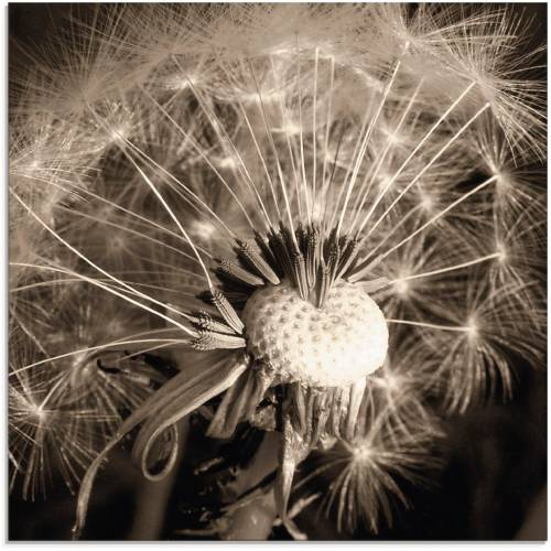 Artland Glasbild »Pusteblume«, Blumen (1 Stück)