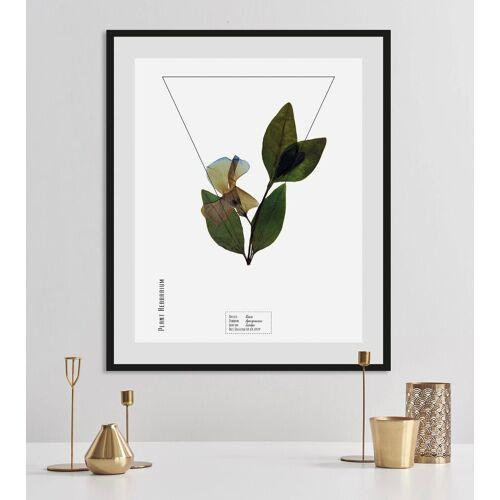 andas Bild »Pflanze«, mit Rahmen