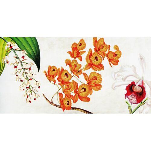 Deco-Panel »REMY DELLAL / Botanik II«
