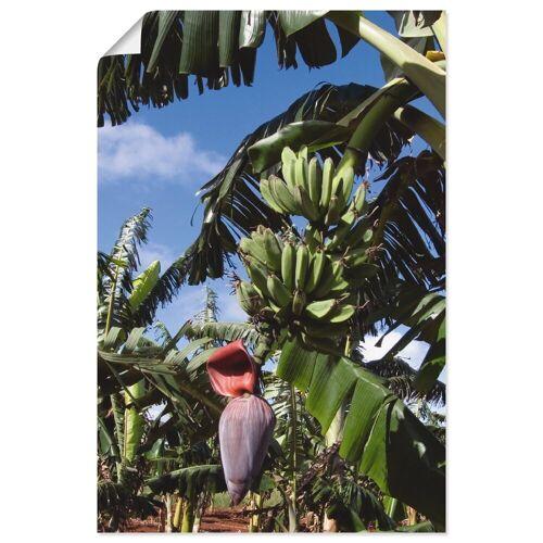 Artland Wandbild »Bananen«, Pflanzen (1 Stück)