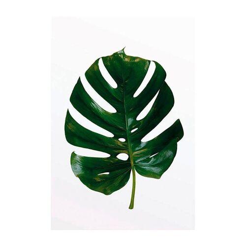 Komar XXL Poster »Monstera Leaf«, bunt