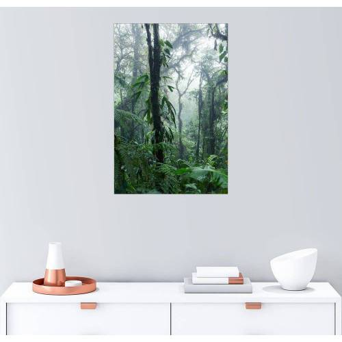 Posterlounge Wandbild, Costa Rica - Regenwald