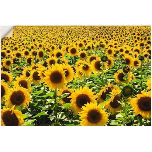 Artland Wandbild »Sonnenblumenfeld«, Blumen (1 Stück)