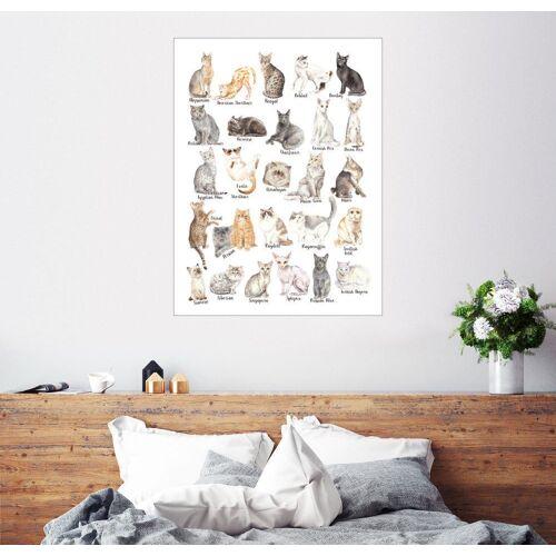 Posterlounge Wandbild, Katzenrassen (Englisch)