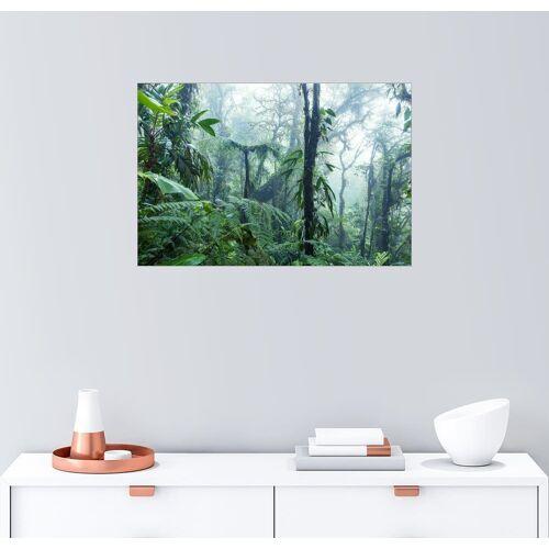 Posterlounge Wandbild, Regenwald in Costa Rica