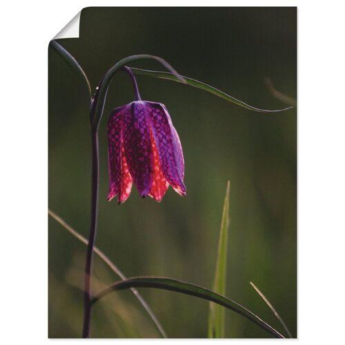 Artland Wandbild »Leuchtende Schachbrettblume«, Blumen (1 Stück)