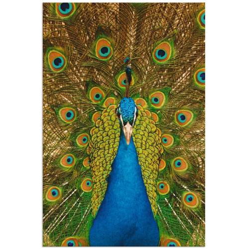 Artland Wandbild »Stolzer Pfau«, Vögel (1 Stück)