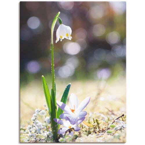 Artland Wandbild »Märzenbecher und Hofstaat«, Blumen (1 Stück)