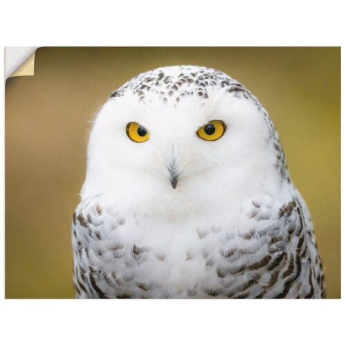 Artland Wandbild »Schneeeule«, Vögel (1 Stück)