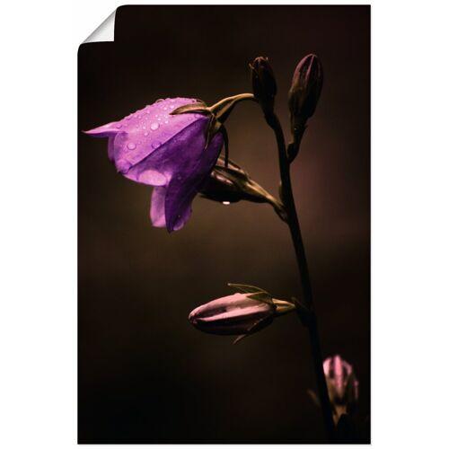 Artland Wandbild »Glockenblume«, Blumen (1 Stück)