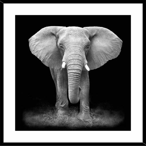 HTI-Line Kunstdruck »Bild Elefant«, Wandbild