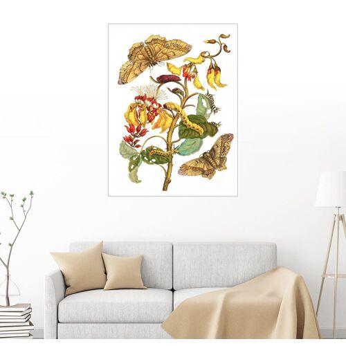 Posterlounge Wandbild, Korallenbaum und Seidenspinner