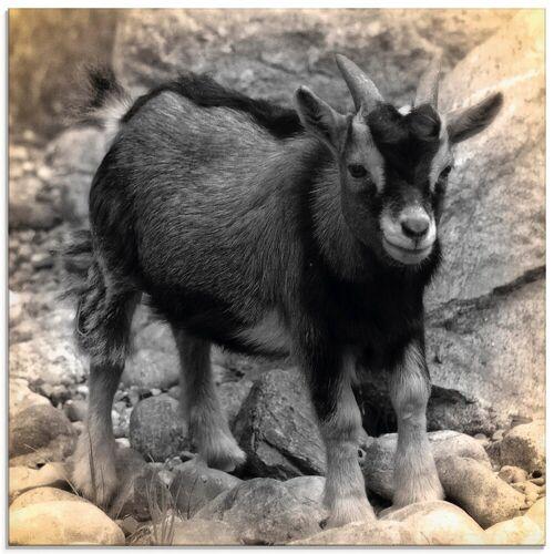 Artland Glasbild »Zwergziegen Baby Kontakt«, Haustiere (1 Stück)