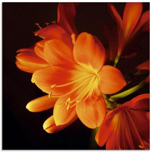 Artland Glasbild »Clivie in leuchtendem Orange«, Blumen (1 Stück)