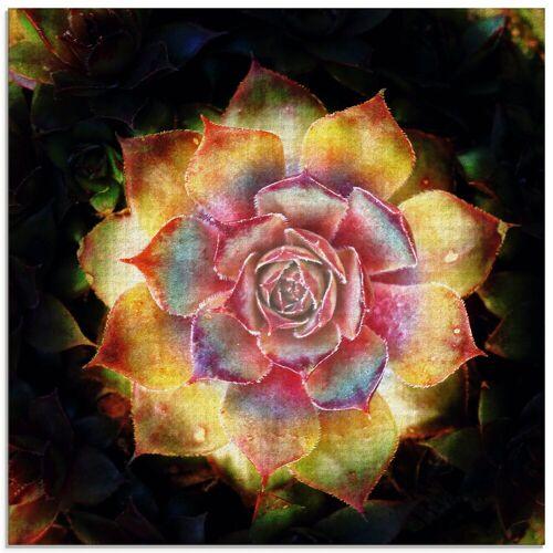 Artland Glasbild »Hauswurz«, Pflanzen (1 Stück)
