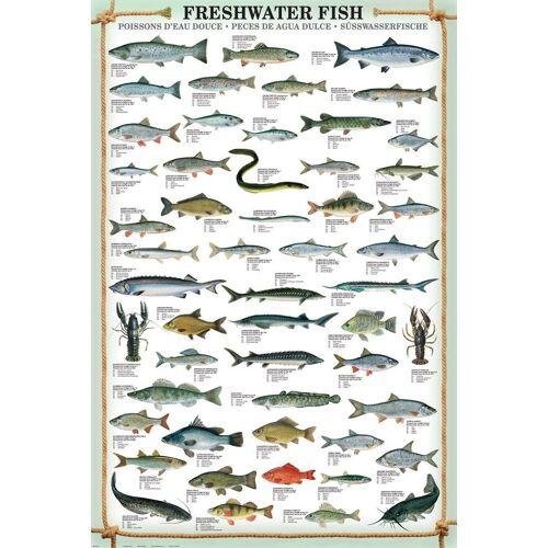 empireposter Poster »Maxi-Poster Süsswasserfische«