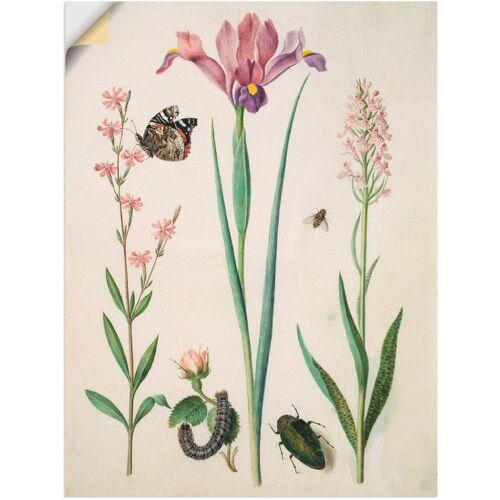 Artland Wandbild »Admiral, Rose Iris Knabenkraut.«, Pflanzen (1 Stück)