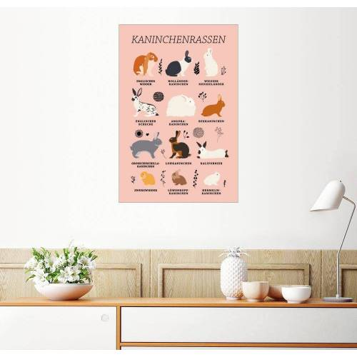 Posterlounge Wandbild, Kaninchenrassen