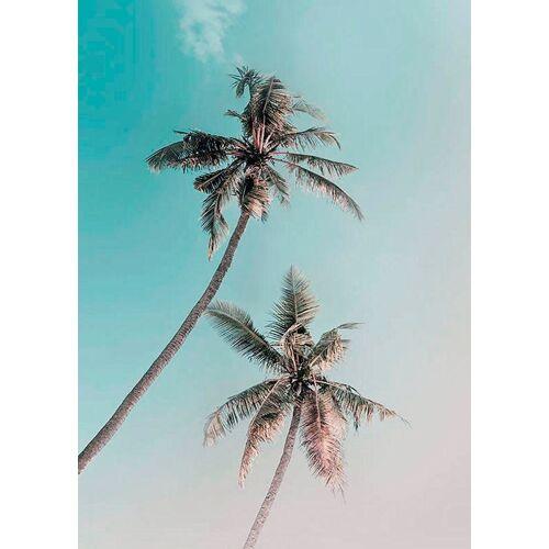 Komar XXL Poster »Miami Palms«, bunt