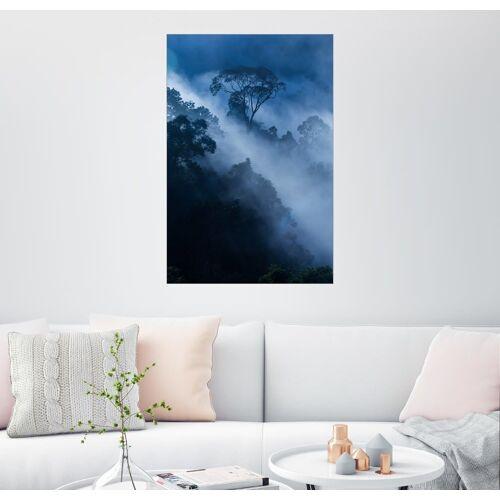 Posterlounge Wandbild, Nebel im Regenwald