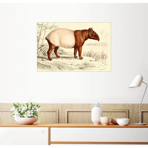 Posterlounge Wandbild, Indischer Tapir