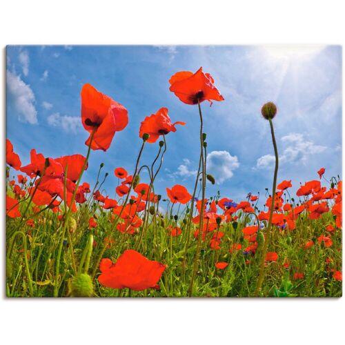 Artland Wandbild »Mohnblumenfeld«, Blumen (1 Stück)