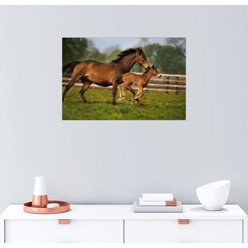Posterlounge Wandbild, Pferde in Irland