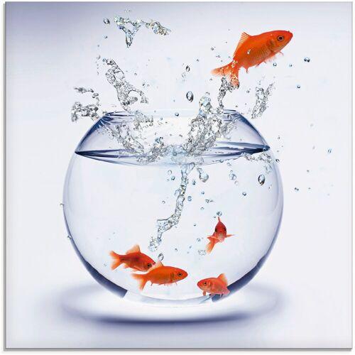 Artland Glasbild »Goldfischaquarium«, Wassertiere (1 Stück)