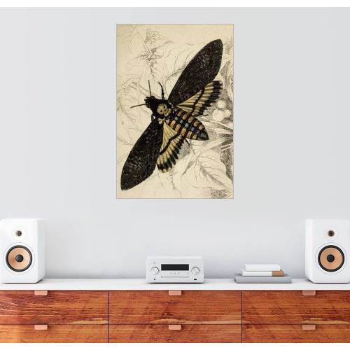 Posterlounge Wandbild, Totenkopfschwärmer