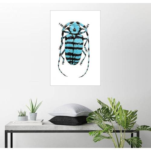 Posterlounge Wandbild, Käfer