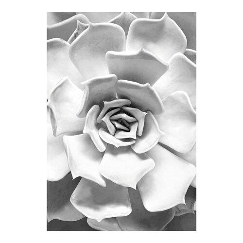 Komar XXL Poster »Succulent Closeup«, bunt