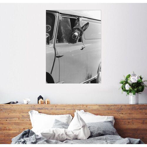 Posterlounge Wandbild, Esel schaut aus dem Autofenster