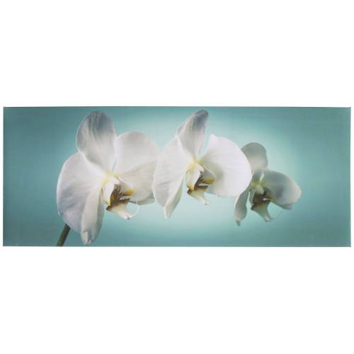 ART for the home Leinwandbild »Orchidee«, Orchidee