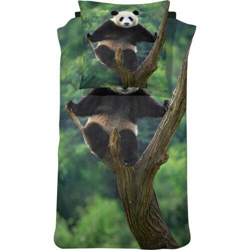 damai Bettwäsche »Panda«, , mit einem Pandabären