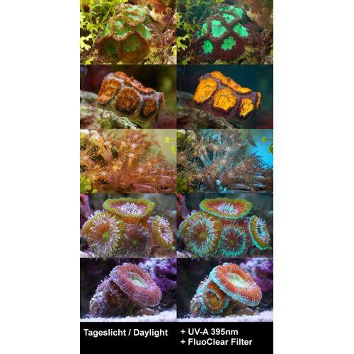 BRESSER Mikroskopfilter »FluoClear Filter für Fluoreszenz 67mm Slim«