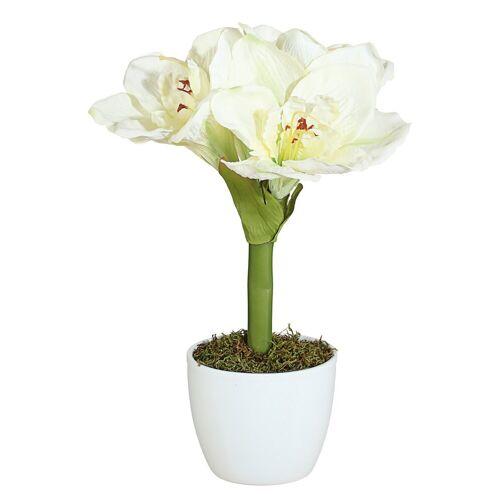 Creativ green Kunstpflanze »Amaryllis«, , Höhe 35 cm